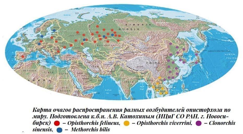 Карта очагов распространения разных возбудителей описторхоза по миру